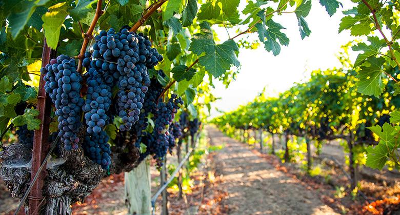 Nassau Valley Vineyard at Delaware